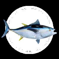 Icon-Barra