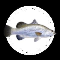 Icon-Tuna